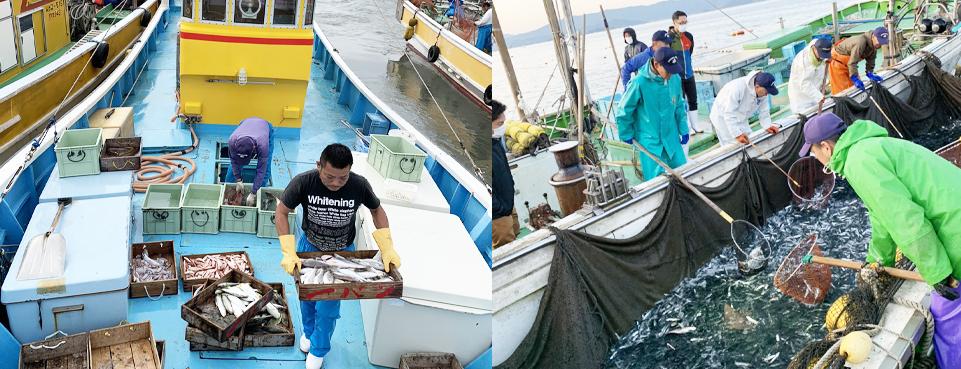 Fixed-net fishing