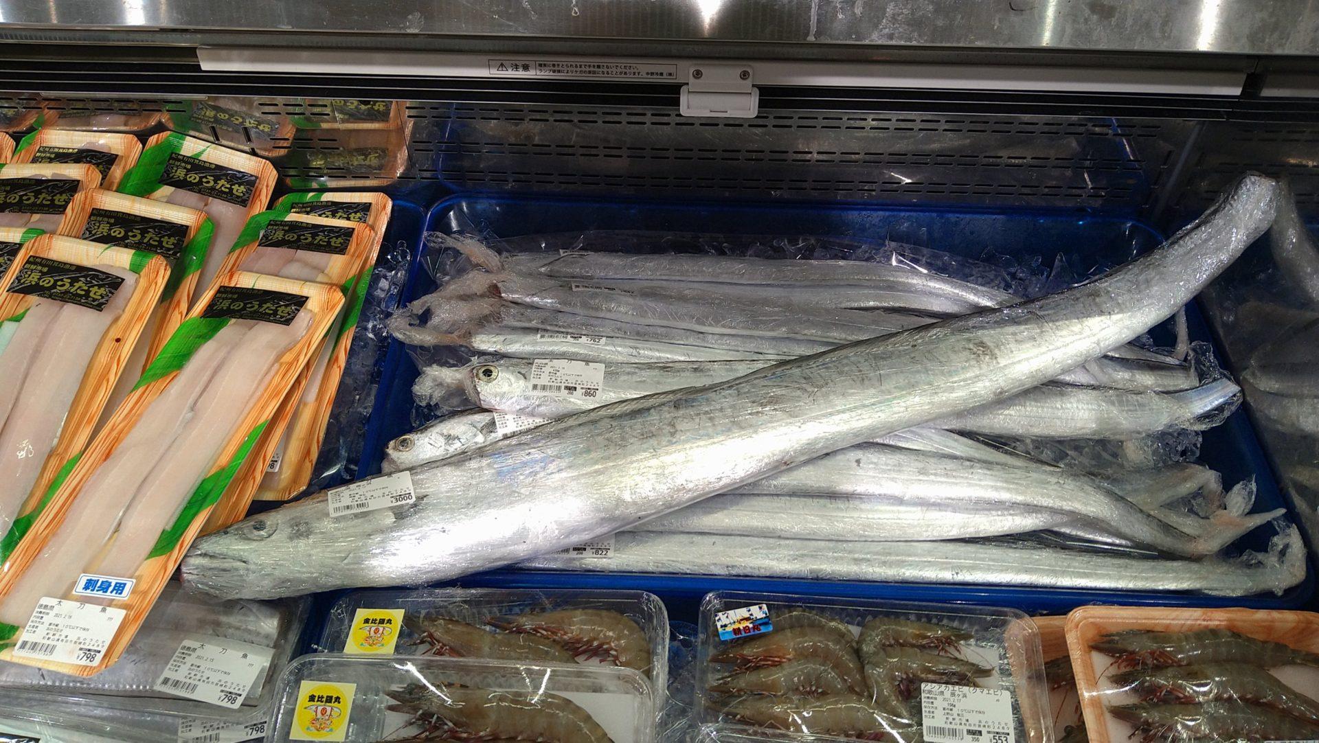 2/15 大きな太刀魚!大人気のアシアカエビ!